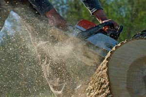 tree services lake forest